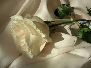mawar putih diatas makam