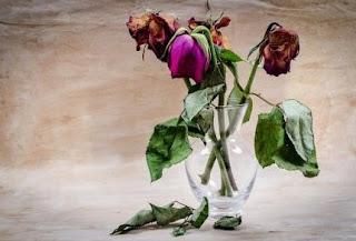 gambar bunga mawar indah 40
