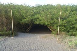 Pantai Goa Cemara, Alternatif Wisata Pantai Di Ujung Selatan Jogja