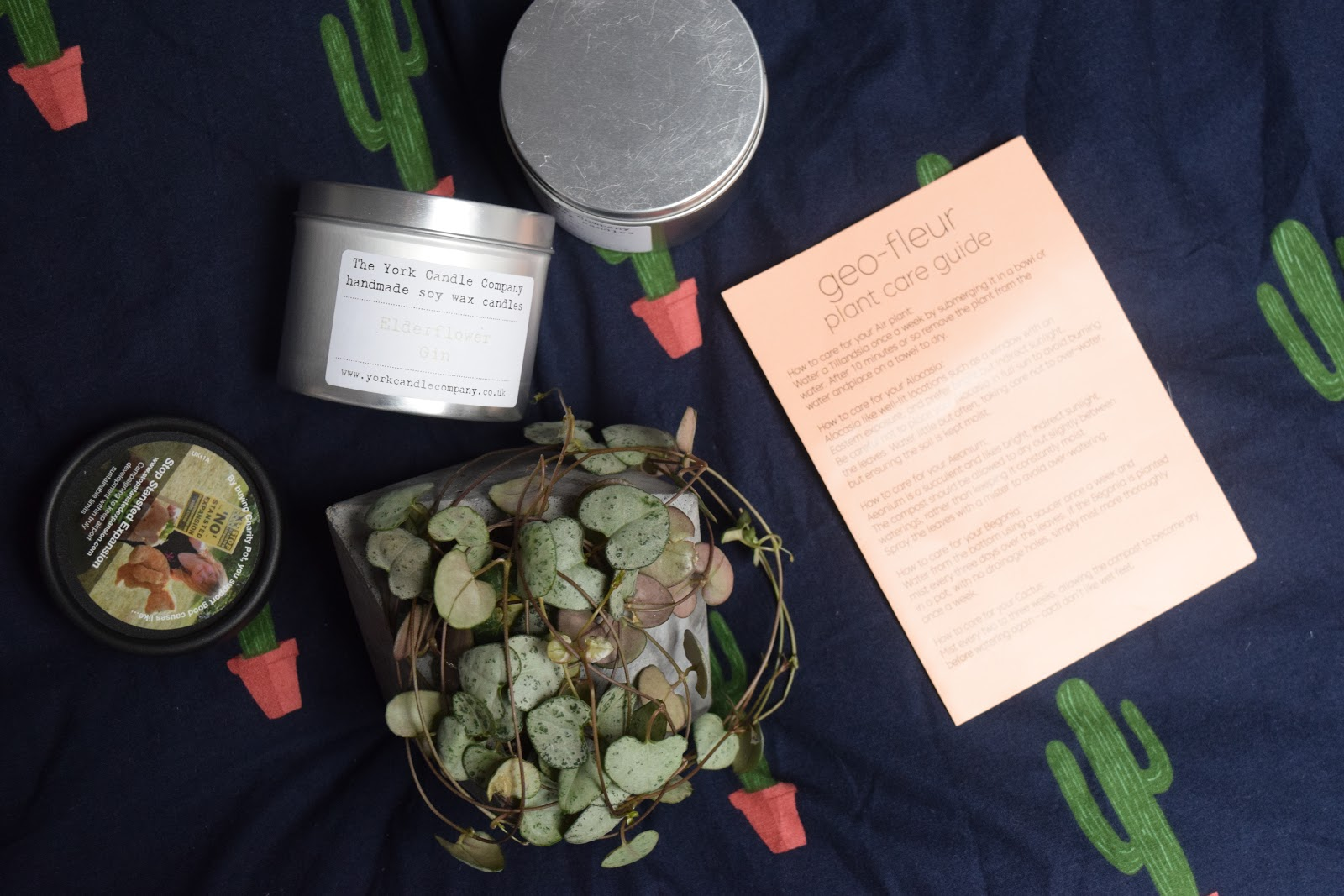 Leeds haul with Geo Fleur string of hearts plant, Lush charity pot moisturiser and York candle company candles