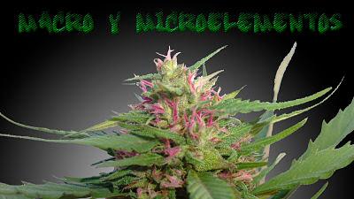macro y micronutrientes en el cultivo de cannabis