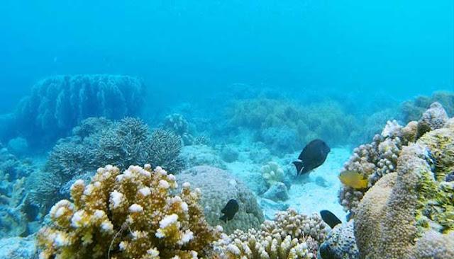 Menikmati Keindahan Bawah Laut Pantai Tanjung Karang Di Kabupaten Donggala
