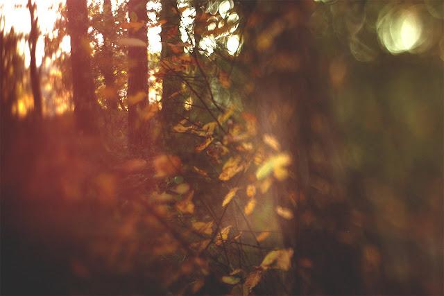 sie robi, autumn leafs, jesienne liscie, freelensing