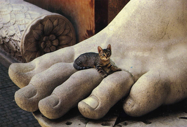 """Cat sitting on Constantine's Foot at the Palatine Museum, Rome.   From the """"Gatti di Roma"""" photo series, photographed by Giancarlo Gasponi, street cat in an odd place, aincent sculpture, cat does what it wants"""