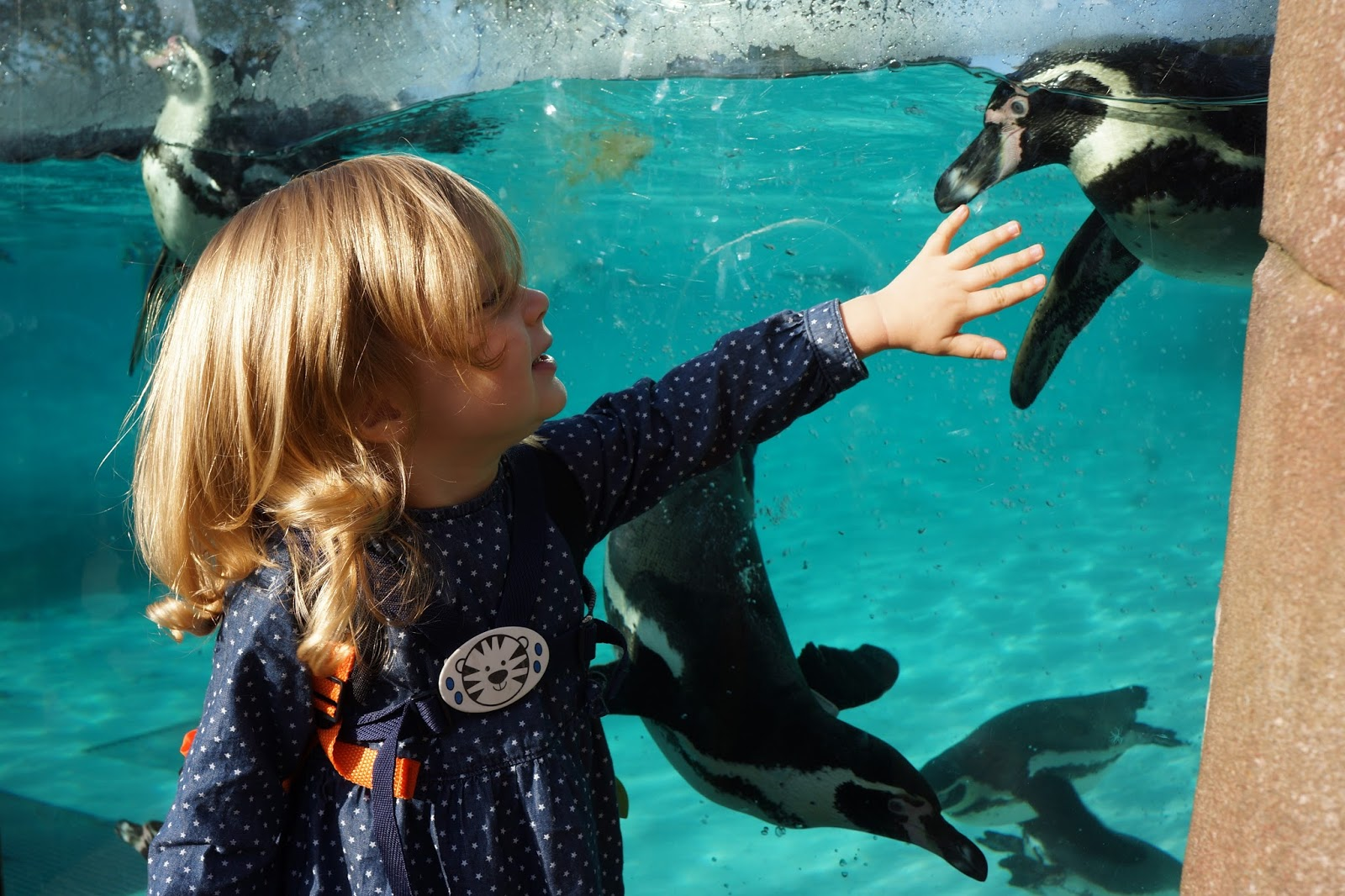 szl london zoo with toddlers meeting penguins penguin beach
