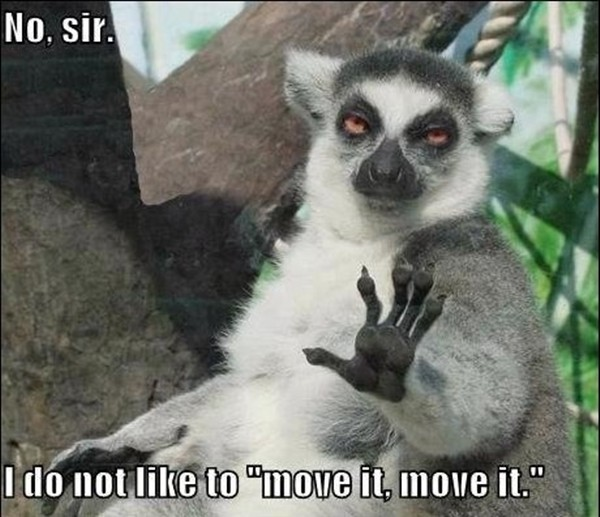 Office Chair Without Arms 30 funny animal captions - part 2 (30 pics) | Amazing ...