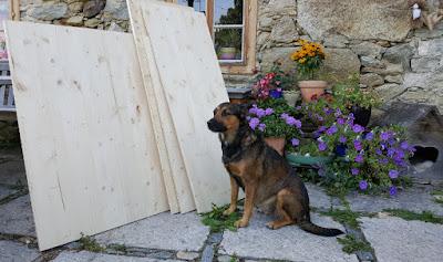 Wurfkistenbau für österreichische Pinscher