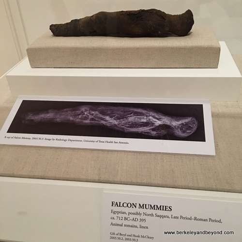 falcon mummy at San Antonio Museum of Art in San Antonio, Texas