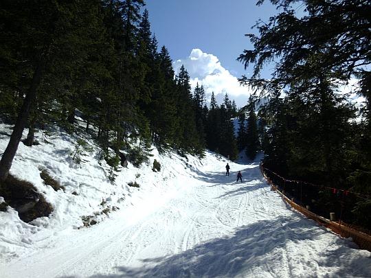 Wąski przejazd przez las świerkowy, zwany przez narciarzy Szyjką