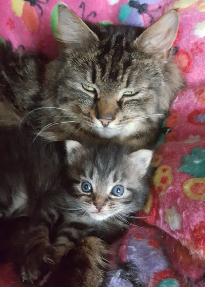 Cats Protection tabby mum and kitten