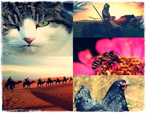 13 Nama Hewan dan Manfaatnya Bagi Manusia
