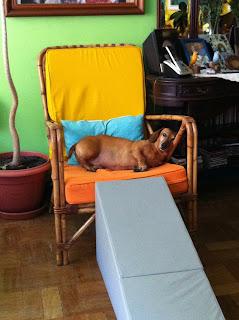 rampa para cães com lesão de medula
