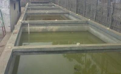 cara budidaya ikan gurame di kolam tembok,gurame di kolam kecil,kolam terpal pdf,di kolam tanah,gurame di rumah,