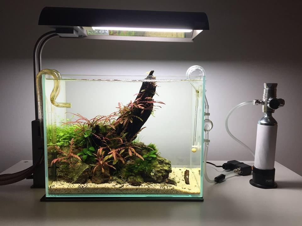 Để cây thủy sinh phát triển tốt nhất nên dùng đèn chuyên dụng cho thủy sinh