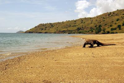 Rinca, Simbol Ikonik Wisata Pulau Flores yang Didambakan Traveler