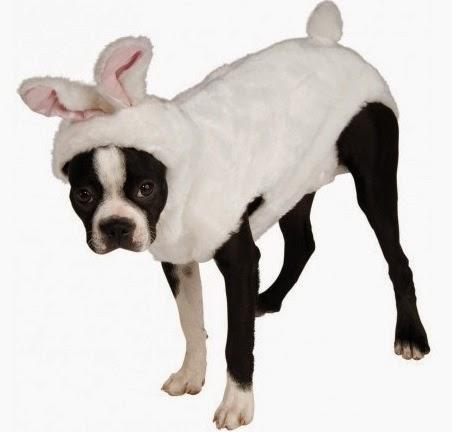 disfraces para perros, disfraces baratos, disfraces carnaval perros, carnaval disfraz para perros