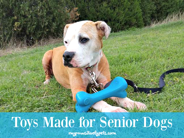 Toys For Elderly : Toys made for senior dogs old soul bone pawsitively pets