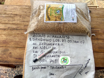 Benih pesana    AGUNG W Gunungkidul, DI Yogyakarta.   (Sebelum Packing)