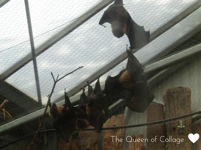 Bats at Cerza Zoo