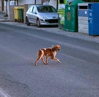 El perrito no conoce el peligro de la carretera  y comienza a cruzarla una y otra vez después  de que lo vuelven a alejar con una patada del bar