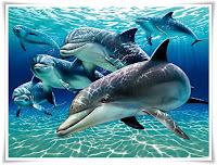 Dolphin Animal Pictures