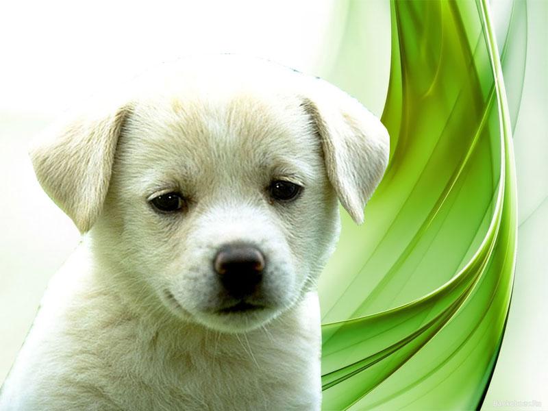 Wallpapers Download: Puppies Wallpapers Download