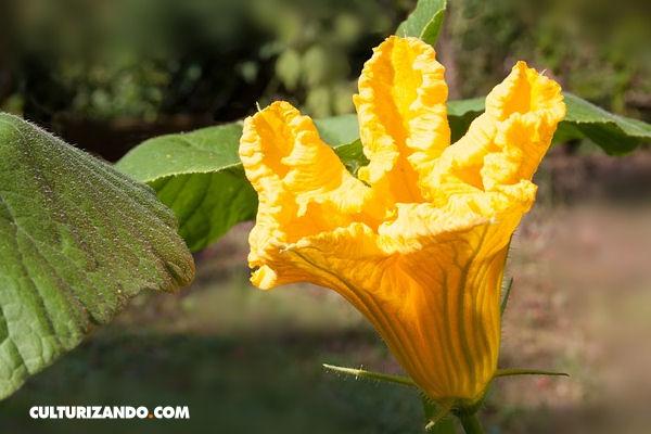 Hoyverde Com Conviertete En Un Autentico Come Flores