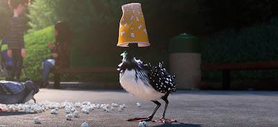 El ave con los ojos más penetrantes y dispersos del mundo xDD.