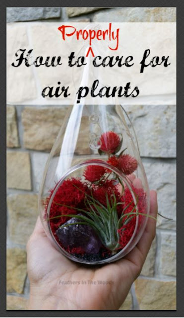 How to | air plants