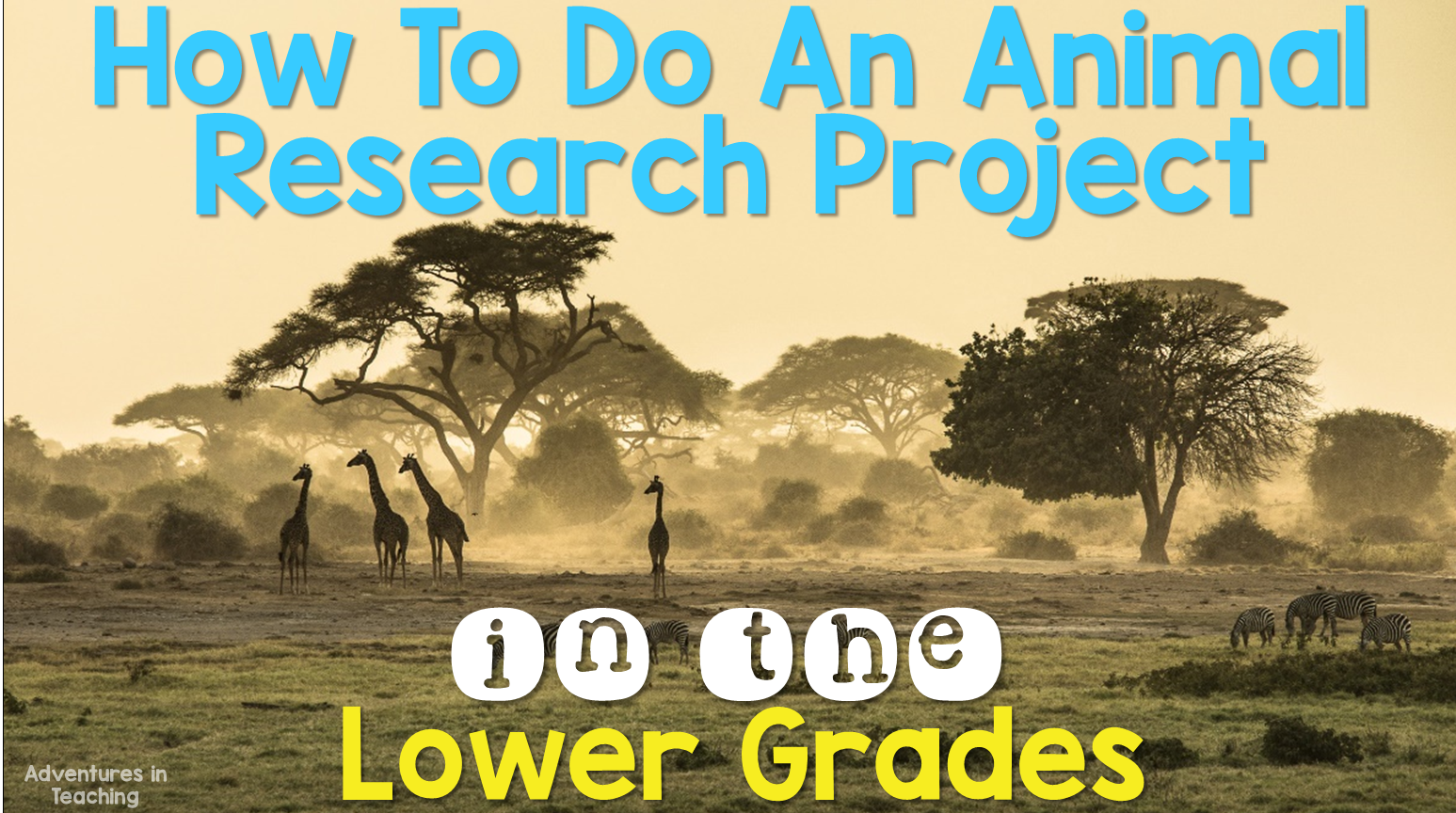 Adventures In Teaching How To Do An Animal Research