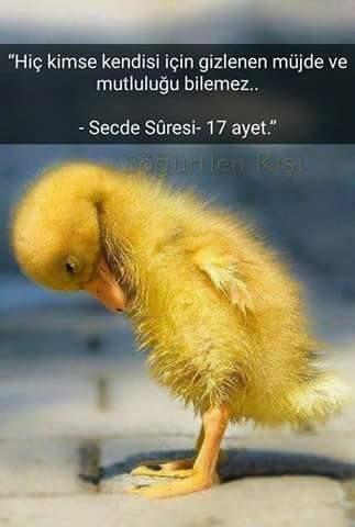 Secde 17