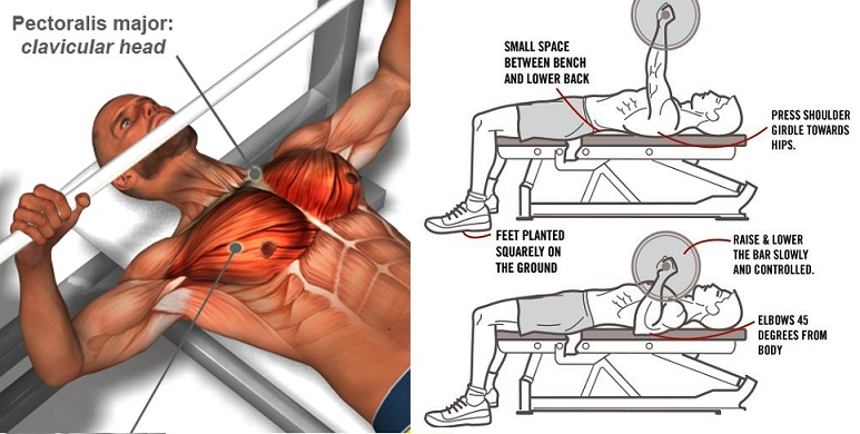 Eight Ways to Improve Your Bench Press: - Daily Body ...