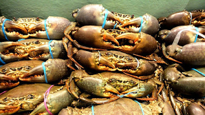 Mud Crab Supplier in Vietnam for Pasta Restaurant