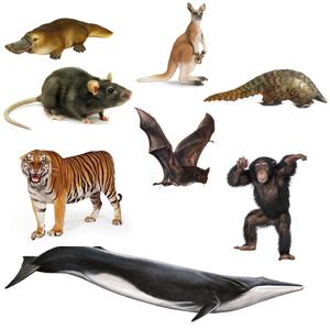 830 Koleksi Hewan Vertebrata Beserta Gambar Terbaik