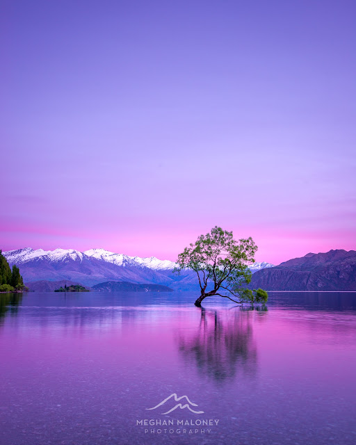 pink sunrise lake wanaka tree