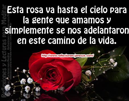 Esta rosa va hasta el cielo, para gente que ámanos y simplemente se nos adelantaron en este camino de la vida