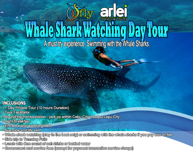 Whale Shark Oslob rates