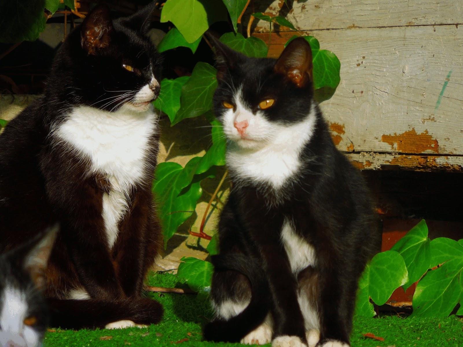 gatti randagi animali felini