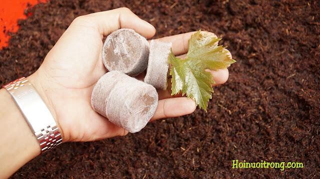 Các sản phẩm nông nghiệp xanh sạch làm từ xơ dừa đã có ở nhiều nơi