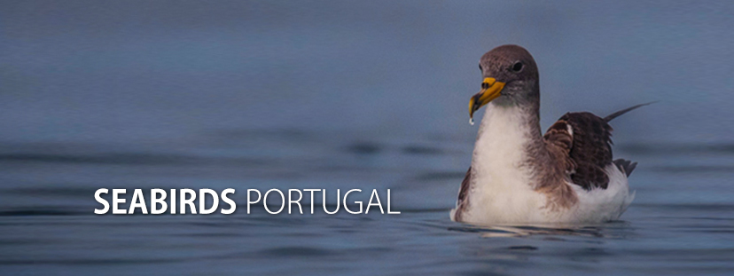 Seabirds Portugal