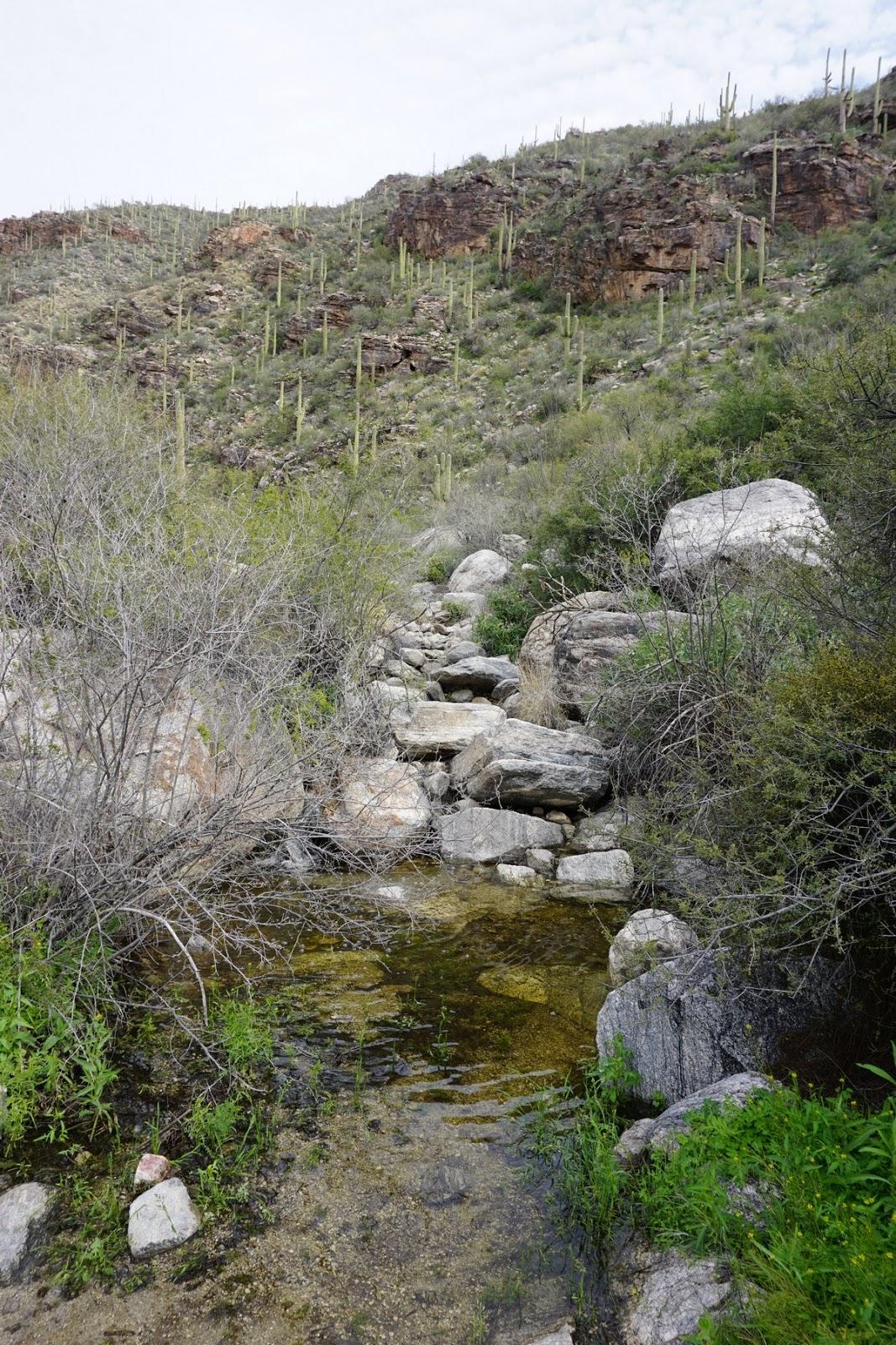 Finger Rock Trail : finger, trail, Harriman, Hiker:, State, Beyond:, Finger, Trail