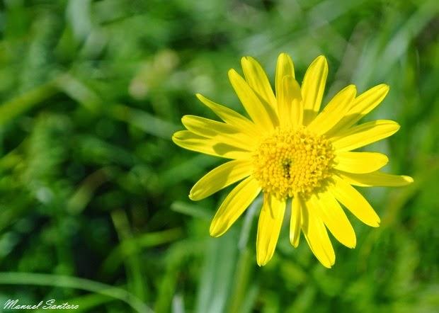 Castelluccio di Norcia, fioritura
