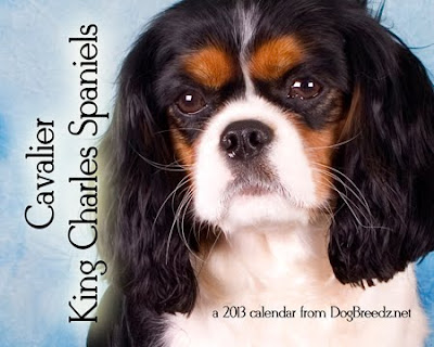 2013 Cavalier King Charles Calendar from DogBreedz.net - a portion of the sale will be donated to Cavalier Rescue
