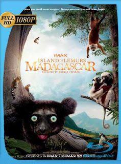 Island of Lemurs: Madagascar (2014) ​​HD [1080p] Latino [GoogleDrive]