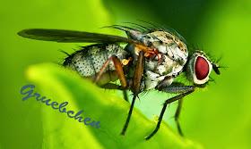 http://grueb-style.blogspot.de/2014/01/insekten-ganz-nah-erste-versuche-in-der.html