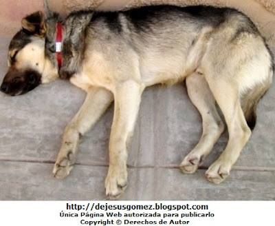 Foto de un perro durmiendo. Foto de perro tomada por Jesus Gómez