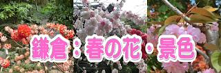 鎌倉:春の花・景色