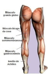 Hipertrofia Muscular - Anatomia Isquiotibiais