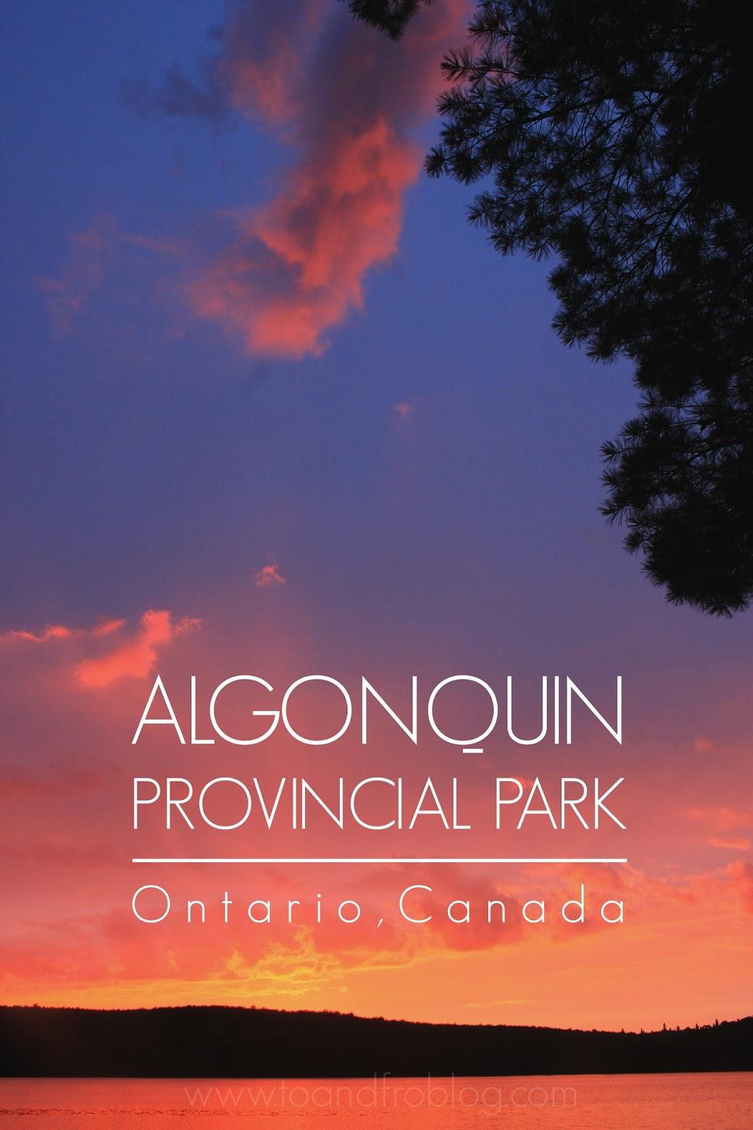 algonquin provincial park, ontario canada