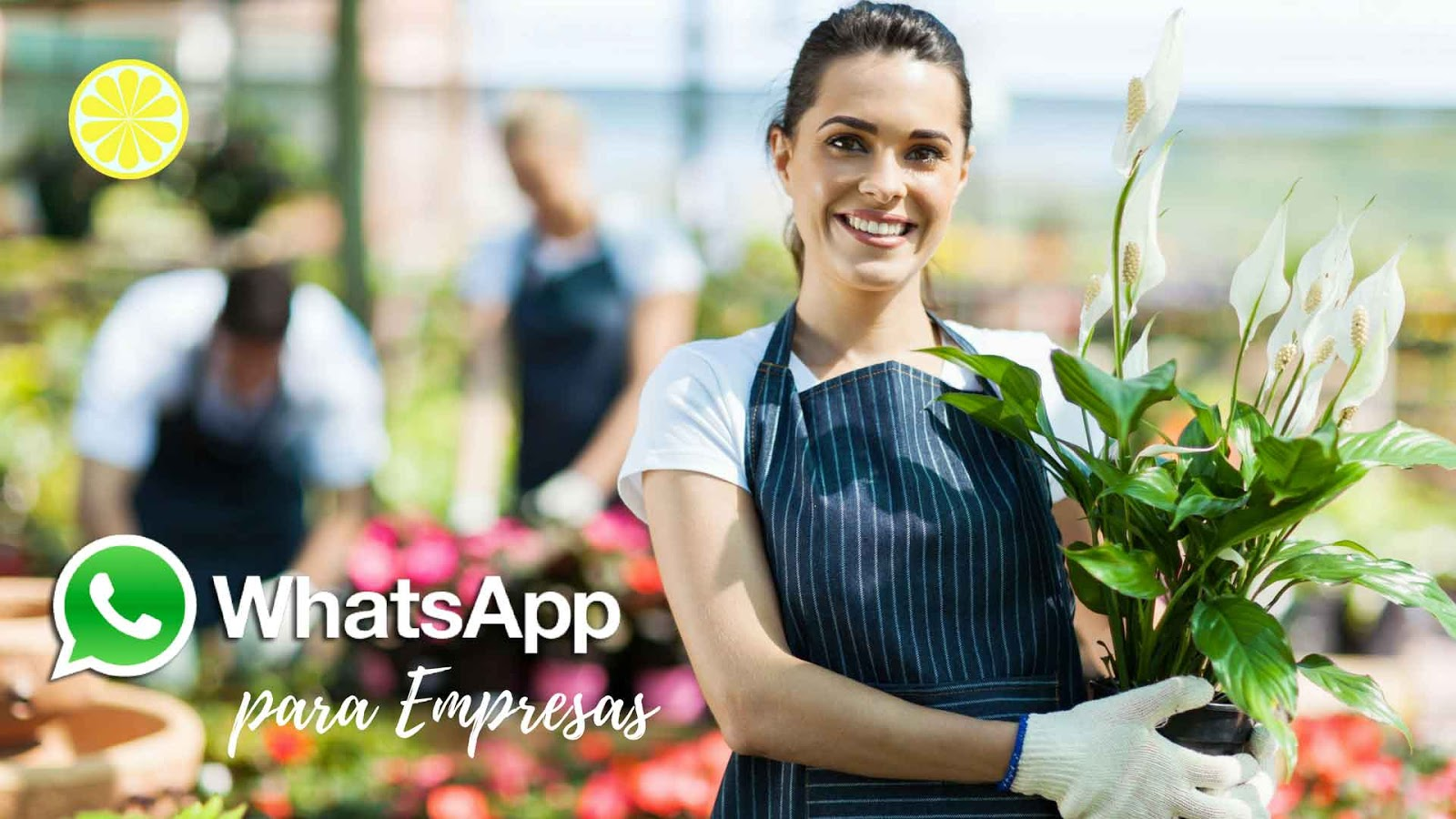 Whatsapp for business, whats para empresas